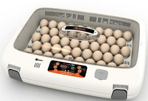 incubadora para loros, incubadora para pajaros y aves