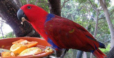 alimentacion loros comida de loros comida de los loros comprar alimentacion para loros comida para loros amazonas