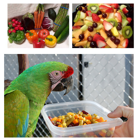 alimento para loros grandes alimento para loros habladores alimentos para loros pequeños comida para loros verdes comida para loros dos meses comida para loros pichones exact comida para loros