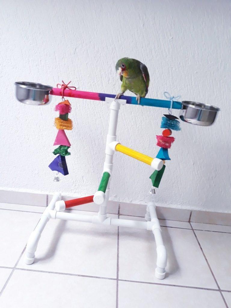 modelos de perchas para loros perchas para jaulas de loros venta de perchas para loros venta perchas loros