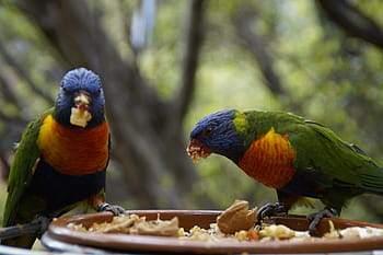 fotografias de loros periquitos ninfas guacamayos