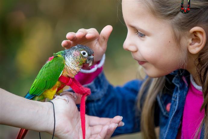 loros como mascota, cuales son los mejores loros mascota, loros para niños, loros y niños