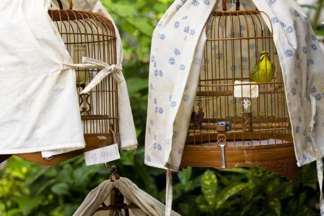 se debe cubrir la jaula del loro con una manta, debo cubrir la jaula del loro, hay que tapar a los periquitos para dormir?