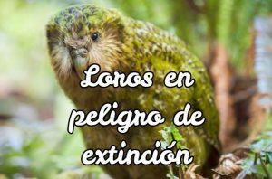 loros en peligro de extinción, loros peligro de extinción, loros en via de extincion