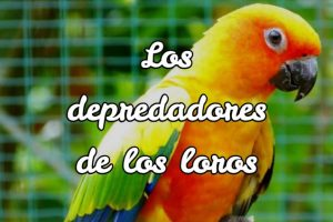quien come loros, que animal come loros, depredadores de loros