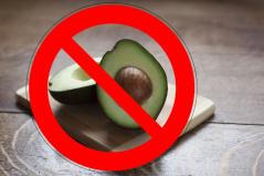 alimentos prohibidos para los loros, el aguacate es prohibido para los loros