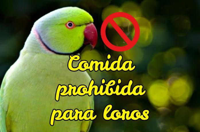 comida prohibida para loros, alimentos tóxicos para loros y cotorros psitácidas