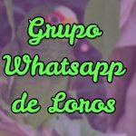 grupo de whatsapp para loros, grupo de información para loros en whatsapp