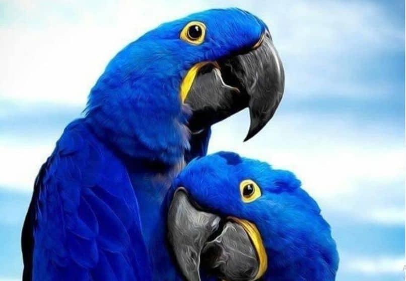 exoticas guacamayas azules