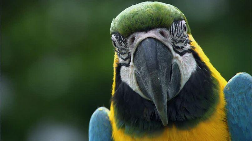 close up de guacamayo azul y amarillo