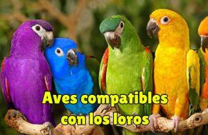 aves compatibles con los loros, que aves pueden convivir con los loros