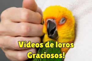 videos de loros graciosos y muy divertidos
