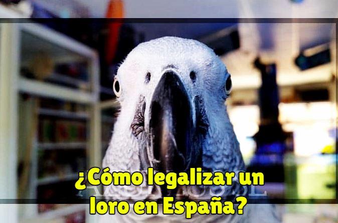 como legalizar un loro en españa para tener un loro de manera legal como mascota. Legalizar aves exóticas en españa yacos y más
