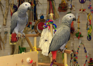 precios de accesorios para loros, precios de los juguetes para loros