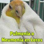 tratamiento de la pulmonia en loros, neumonia de los loros, como curarla