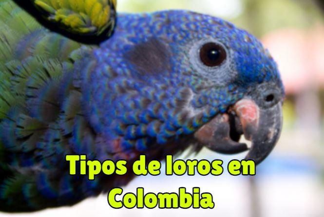cuales son los tipos de loros en colombia? loros de colombia especies en extincion en colombia