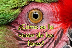 como es la vision de los loros, como ven los loros, los loros pueden ver hacia adelante, vision ultravioleta loros