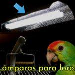lamparas para loros, comprar lámparas para loros, iluminación para pericos y cotorros, comprar luces para loros