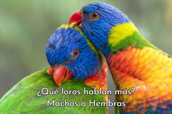 que loro habla mas macho o hembra, loros que hablan mas machos o hembras, los loros machos hablan mas que las hembras, los cotorros hembra pueden hablar?