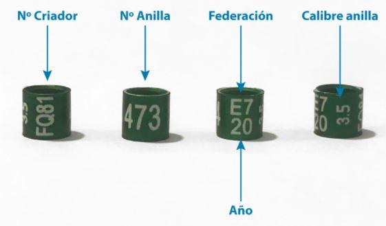 partes de las anillas para loros, información que podemos leer en las anillas para un loro