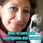 alex es el loro más inteligente del mundo, la historia de alex, el loro mas inteligente del mundo