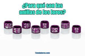 para que sirven las anillas de loros?, para que son las anillas de loros, para que son las anillas para loros, explicación e información sobre las anillas de loros