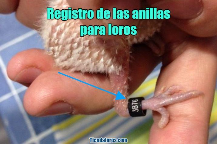 registro de anillas para loros, como registrar la anilla de mi loro
